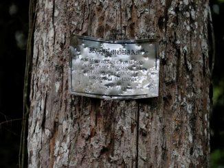 Ausência do Estado e de investigações ocasionam as chamadas máfias da floresta